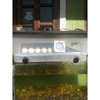 Chocadeira de 30 a 40 ovos totalmente automática rj