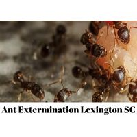 Commercial & Residential Ant Extermination in Lexington SC