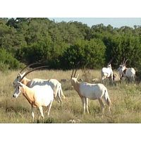 Dominion Properties | Hunting Land Texas Hill Country