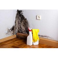 Professional Mold Removal Service Provider in Sanford NC