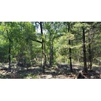 Latest Hunting Land For Sale