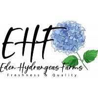 Buying Wholesale Bulk Hydrangea Flowers - Eden Hydrangeas Farms