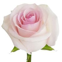 Wholesale Flowers in New Jersey   Paradise Flowers
