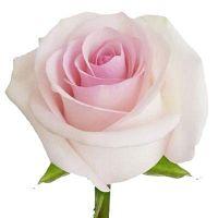 Buy Wholesale Israelic Ruscus Flowers - Eden Hydrangeas Farms