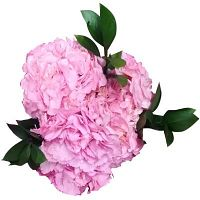 Wholesale Flowers in South Amboy   Paradise Flowers