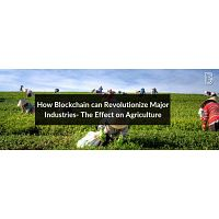 How Blockchain can Revolutionize Major Industries- The Effect on Agriculture