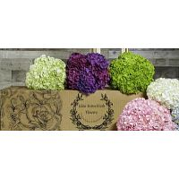 Hydrangea Flowers delivery in South Amboy, New Jersey