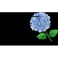 Advantage of ordering bulk hydrangeas flowers   EHF