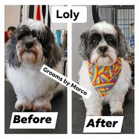 Pet Grooming Salon Chicago - Give Your Dog A New Style