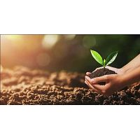 Nitrogen Fixing Bacteria For Better Plant Growth | indogulfbioag
